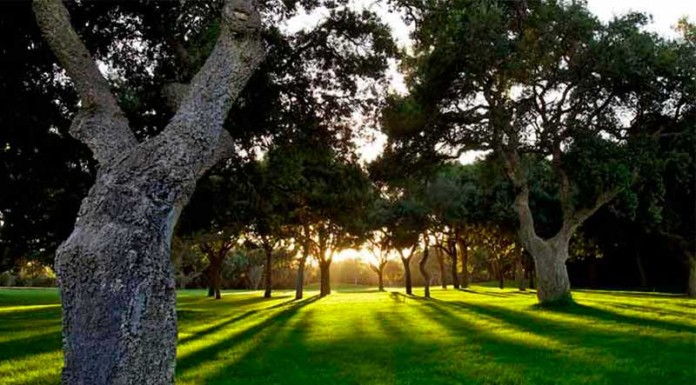 Campo de golf Valderrama (Sotogrande, Cádiz)