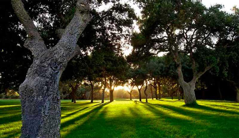 Campo de golf Valderama (Sotogrande, Cádiz)